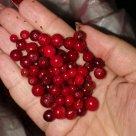 Замороженная ягода - брусника. Класс А. Китай. в Томске