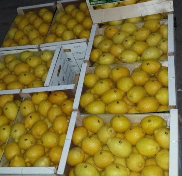 Лимон, Доставка морским контейнером