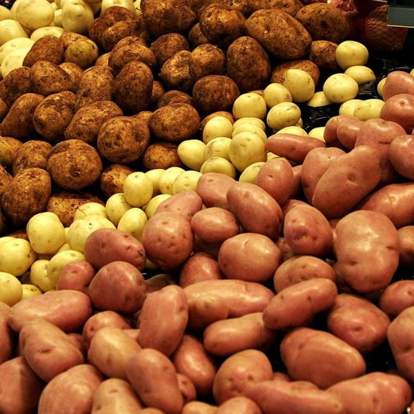 Картофель оптом.разные сорта.