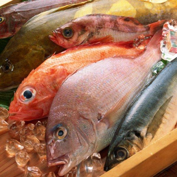 Рыбопосадчный материал малька стерляди и бестера