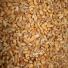 Пшеница крупная горновка
